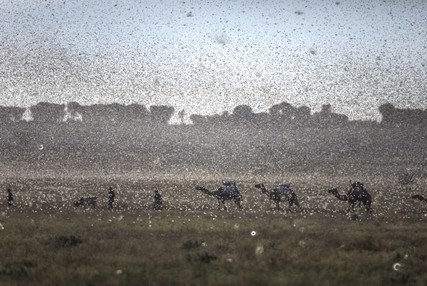 New swarms of locusts threaten to increase hunger in East Africa reeling from floods and coronavirus (只有英文) - 图像
